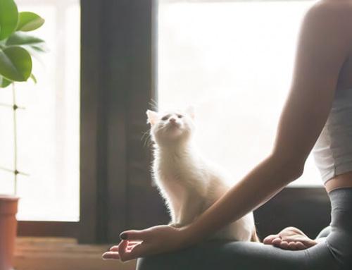 Cómo hacer yoga en casa y no dejarlo a los dos días