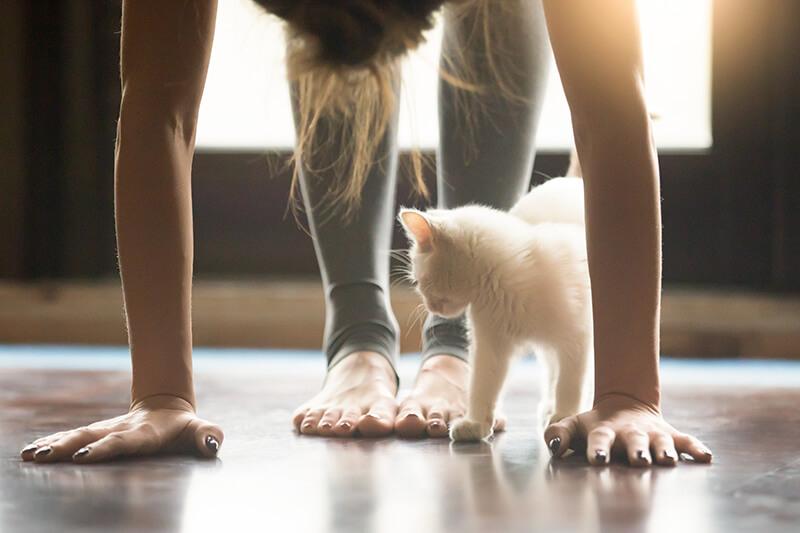 Yoga para principiantes en casa